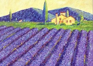 lavender-fields-monika-pagenkopf (3)